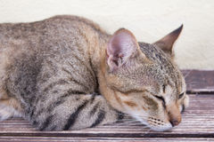 Cat relaxing. A tiger (tabby) cat relaxing at front yard Royalty Free Stock Photography