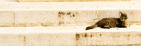 Cat on stairs. Tabby cat resting on stone stairs Royalty Free Stock Photos