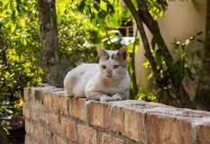 Cat Relaxing On Wall stockfoto