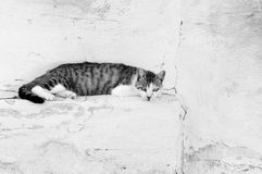 Cat relaxing on the wall in black and white Stock Photo