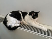 Cat relaxing on a warm radiator Stock Images