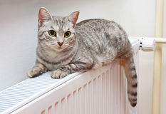 Cat relaxing on a warm radiator. A tiger (tabby) cat relaxing on a warm radiator Stock Images