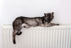 Cat relaxing on a warm radiator Royalty Free Stock Image