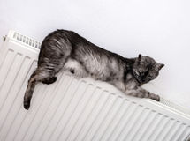 Cat relaxing on a warm radiator Stock Photos