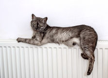 Cat relaxing on a warm radiator Stock Photo