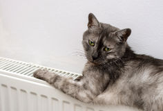 Cat relaxing on a warm radiator Royalty Free Stock Images