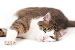 Cat relaxing Stock Photo
