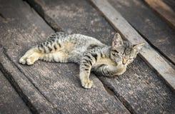 Cat relaxing Stock Photos