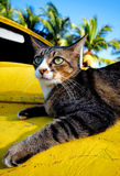 Cat Relaxing on a Yellow Car. Cat relaxing on an old classic car on a tropical island Royalty Free Stock Photos