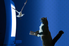 Cat with remote control watching television Royalty Free Stock Photos