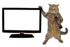 Cat with remote near the TV stock photo