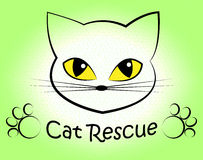 Cat Rescue Means Pet Kitty And Saving. Cat Rescue Showing Felines Pedigree And Pet Stock Photography