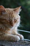 Cat at rest stock photography