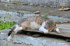Cat rest on board. Outdoor, at summer Stock Photography