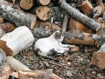 Cat rest in firewood Stock Images