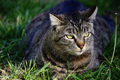 Cat. Rest on the grass in local park Stock Photo