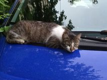 Cat at rest. Kitty resting on blue car Stock Image