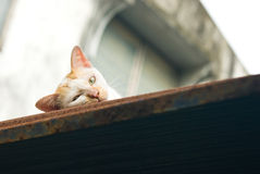 Cat rest on roof top Stock Photos