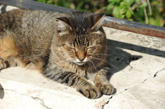 Cat rest on street Stock Images