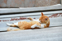 Cat rest on street. Cat rest on city street at summer Royalty Free Stock Photo