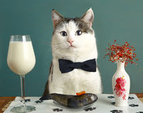 Cat in restaurant with milk and raw fish. Cat with milk and raw fish - funny photo advertising healthy natural food for pats Royalty Free Stock Image