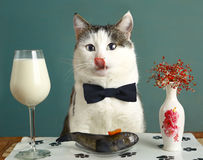 Cat in restaurant with milk and raw fish. Cat with milk and raw fish - funny photo advertising healthy natural food for pats royalty free stock images