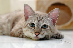 Cat resting. At the floor stock images