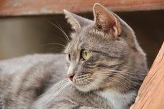 Cat Resting Stockbilder