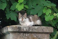 Cat Resting Fotografie Stock
