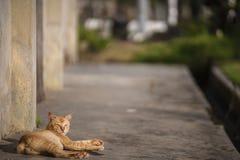 Cat Resting stock afbeelding