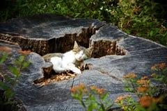 Cat Resting royalty-vrije stock fotografie