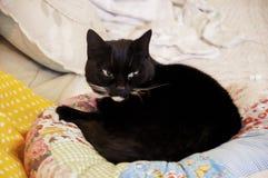 Cat Resting Image libre de droits
