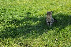 Cat Resting Fotografía de archivo