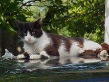 Cat Resting imagenes de archivo
