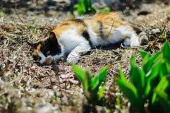 Cat Resting Fotos de archivo libres de regalías