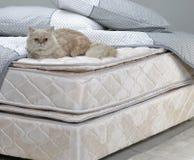 Cat Resting auf Bett Stockbilder