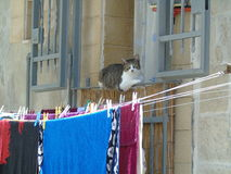 Cat while resting on the balcony railing. Southern Italy Royalty Free Stock Image