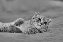 Cat resting on the bed stock photos