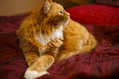 Cat Resting on Bed Royalty Free Stock Images