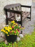 Cat resting on bench outdoors stock image