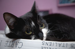 Cat. Resting on the box Stock Photo
