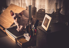 Cat resting Stock Images