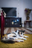Cat resting on carpet Royalty Free Stock Image