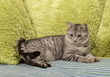 Cat, resting cat on a sofa in colorful blur background, cute funny cat close up, young playful cat on a bed, domestic cat, relaxin Stock Image