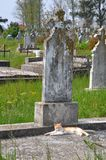 Cat resting on cemetery Stock Images
