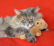 Cat resting on the couch cuddling a teddy bear Royalty Free Stock Photography