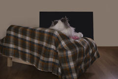 Cat resting on the couch Royalty Free Stock Photos