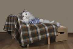 Cat resting on the couch Royalty Free Stock Photography