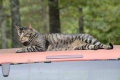 Cat Resting en el top del camión en Missouri Imágenes de archivo libres de regalías