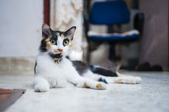 Cat resting on floor Stock Image